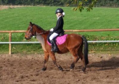 Bixie wedstrijden - Informatie over pony bixie wedstrijd
