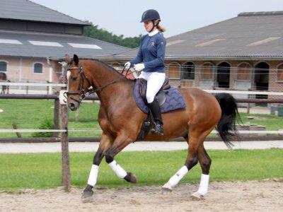 De training van een sportpaard