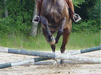 Dressuurruiter aan het springen