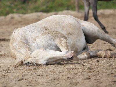 Equine Infectieuze Anemie