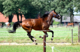 Fit te paard