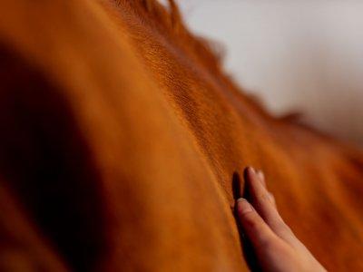 Heeft je paard last van wedstrijdspanning?