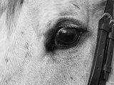 Het gezichtsvermogen van een paard