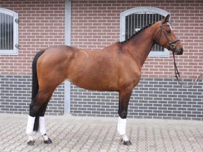 Lichaamsconditie van het paard