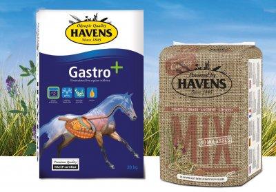 Nieuw paardenbrok: Gastro+