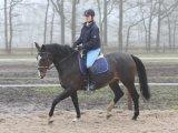 Oud paard, fit paard