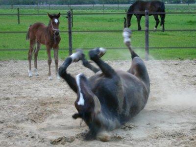 Paarden-persoonlijkheden die je vast kent