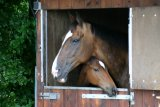 Pensionstal of paarden aan huis?